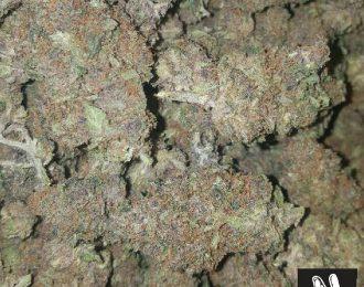 Purple erkkle