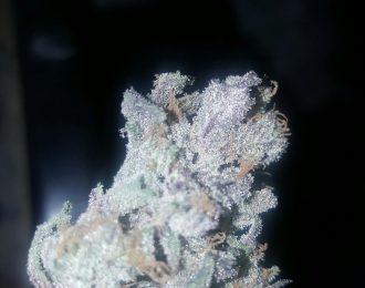 Berry white (indoor)